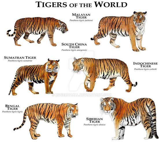 tijgersvdwereld.jpg